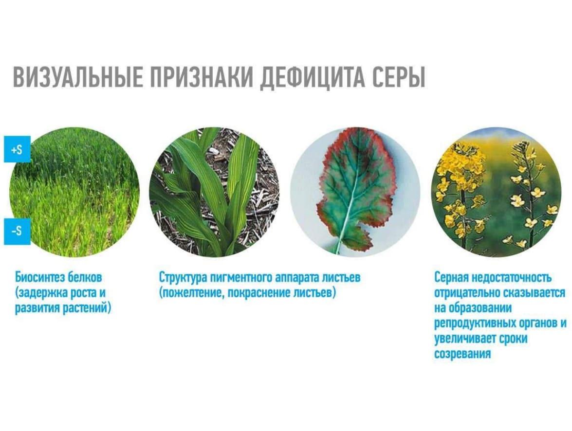 Роль магния и серы в жизни растений